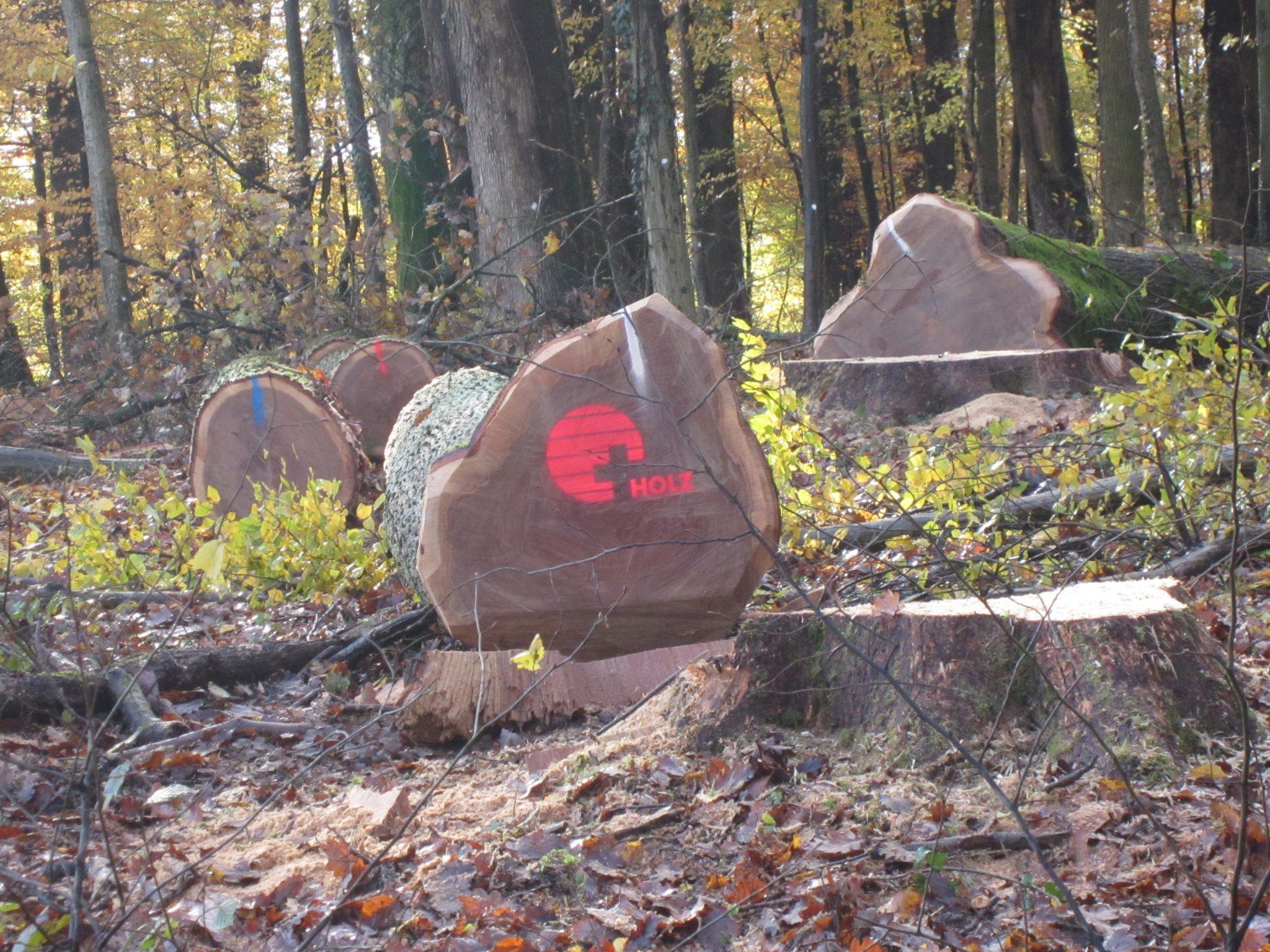Amt für Wald beider Basel/LIGNUM