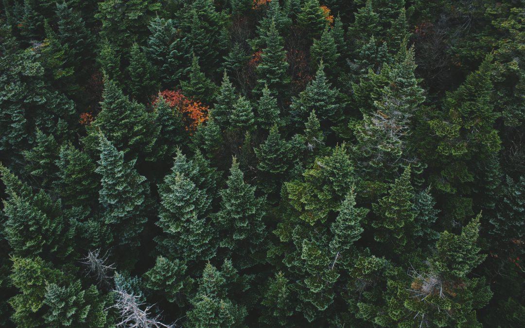Le bois suisse, une opportunité de se démarquer