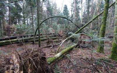 Tempêtes hivernales de début 2018 : près de 1,3 million de mètres cubes de bois au sol