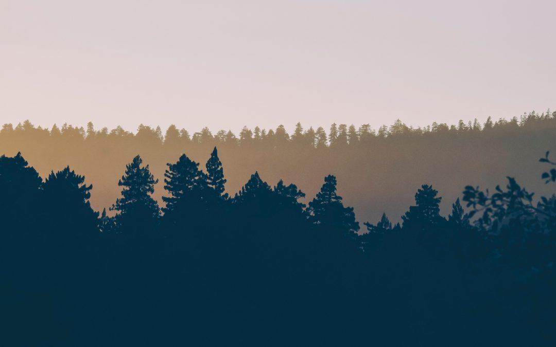 Le Conseil fédéral approuve le rapport sur l'optimisation de l'exploitation du bois