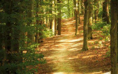 Réseau d'exploitations forestières de la Suisse