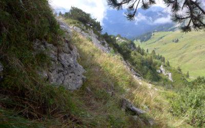 La forêt suisse en images