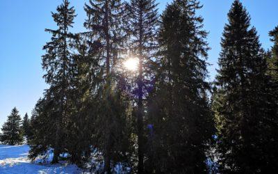 Le Conseil des Etats demande une stratégie globale pour l'adaptation de la forêt face aux changements climatiques