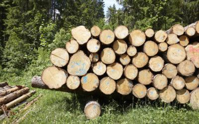 La situation se détend du côté des bois bostrychés, la demande est en hausse pour le bois frais