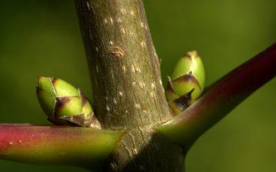 Hivers trop doux : quelles conséquences pour les arbres ?