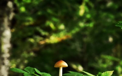 Campagne « Diversité de la forêt »