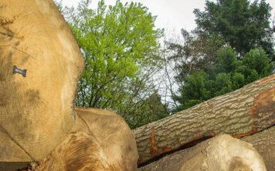 La récolte de bois suisse a reculé en 2019