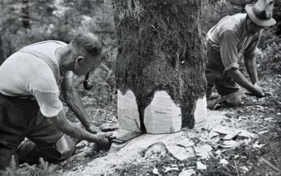 ForêtSuisse : 100 ans au service de la forêt
