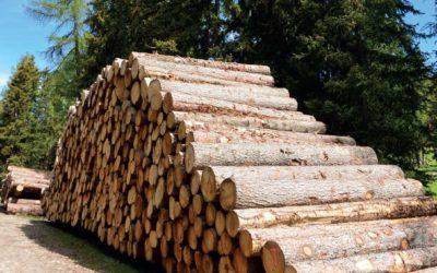 Le prix du bois explose. La filière se remet en question